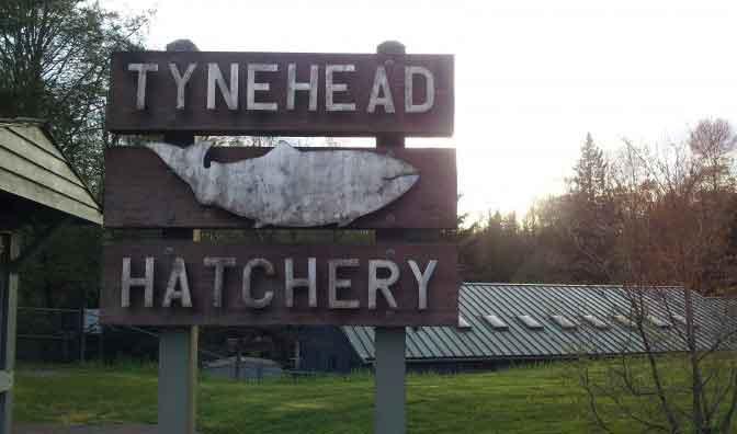 Tynehead Hatchery