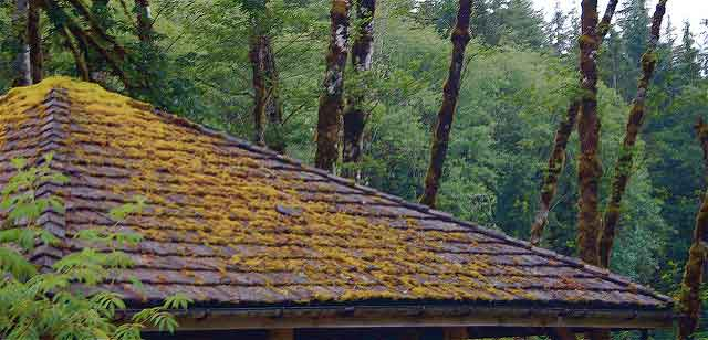 How to Handle Moss on Your Roof
